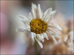 flowerforyouklf