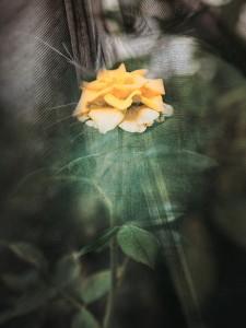 vintageflowerklf